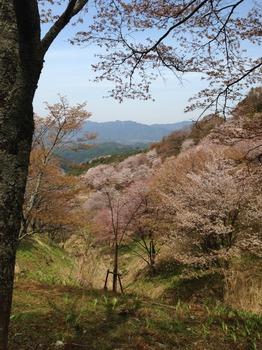 fukuIMG_1020.jpg