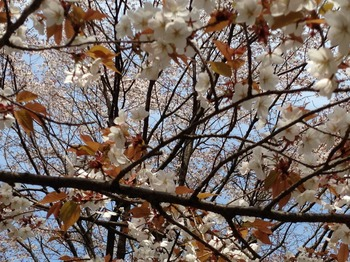 fukuIMG_1023.jpg